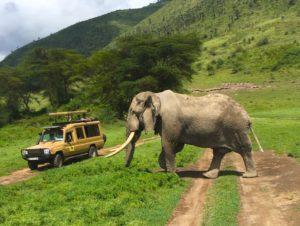 Højskole-i-udlandet Sabbatår Frivilligt-arbejde Tanzania-safari